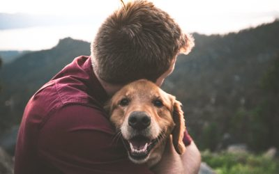 Can I Include My Pet in My Will?